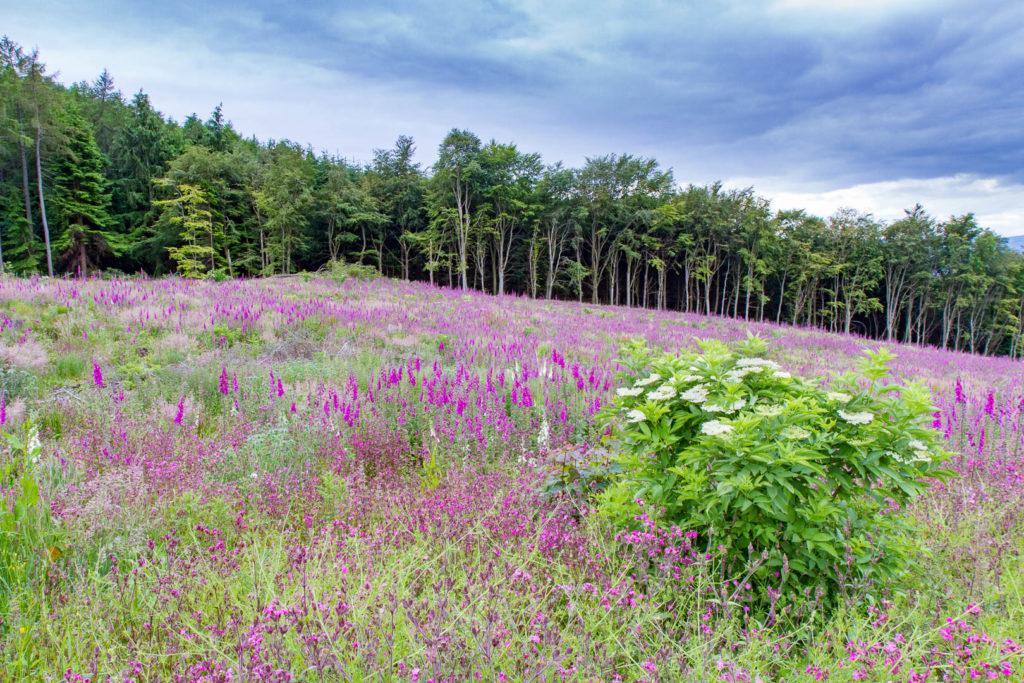 sol de fleurs devant une forêt