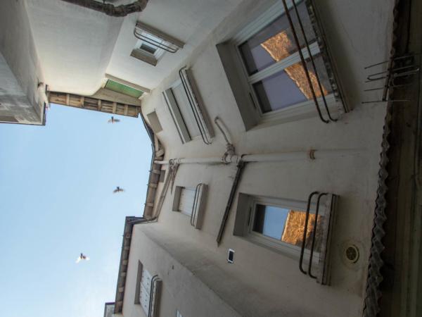 vol de pigeons au-dessus d'une cour à Nantes