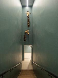 deux têtes de girafes sortent d'un mur, en bas d'escaliers