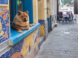 chien chow chow sur un rebord de fenêtre