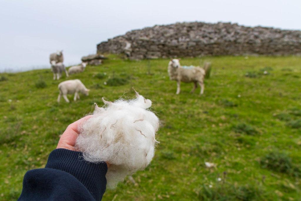 boule de laine avec moutons en arrière-plan