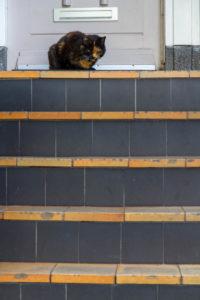 un chat roux et gris en haut d'un escalier orange et gris