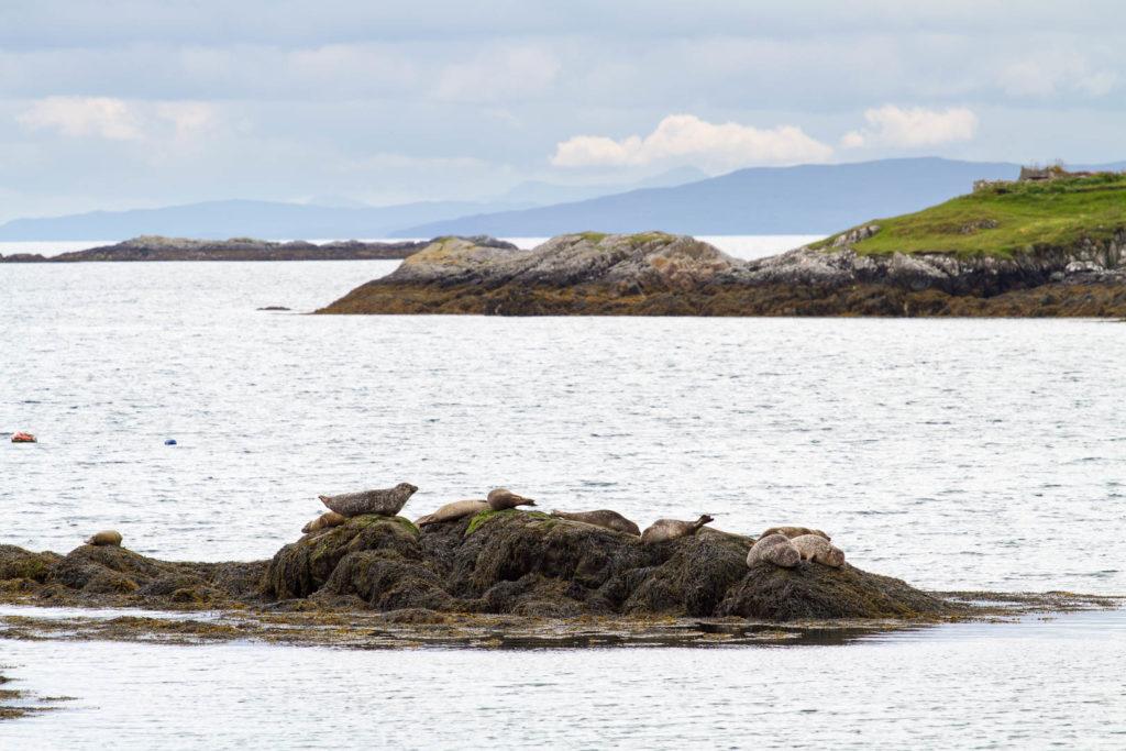 groupe de phoques au repos sur un rocher