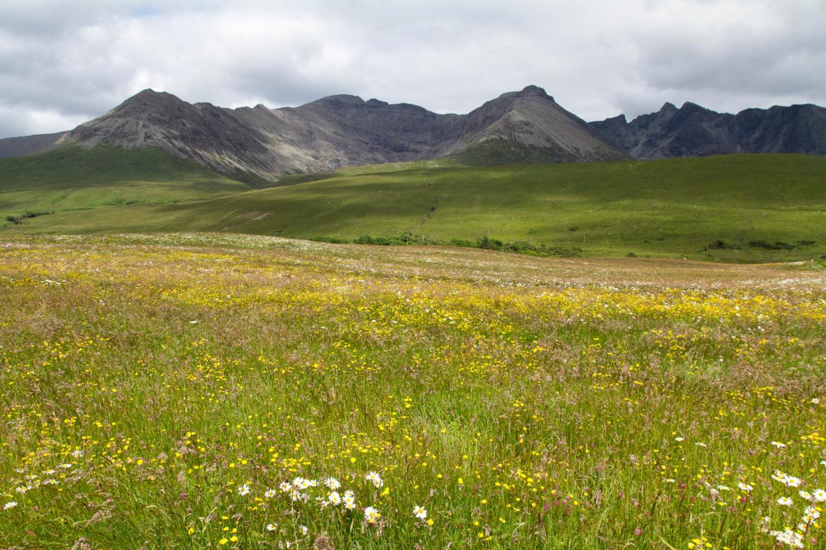 paysage de montagnes derrière une prairie fleurie