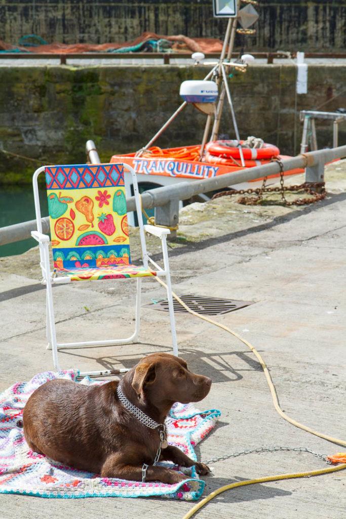 labrador allongé au port devant le bateau Tranquility