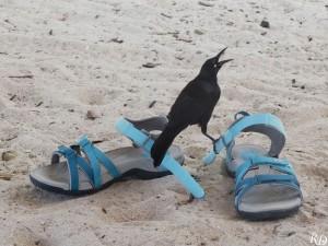 Un fan de mes chaussures !